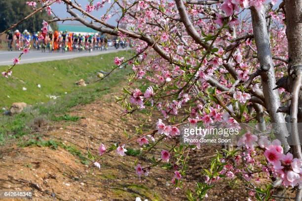 63rd Ruta del Sol 2017 / Stage 4 Landscape / Peloton / Tree/ La Campana Sevilla / Vuelta a Andalucia /