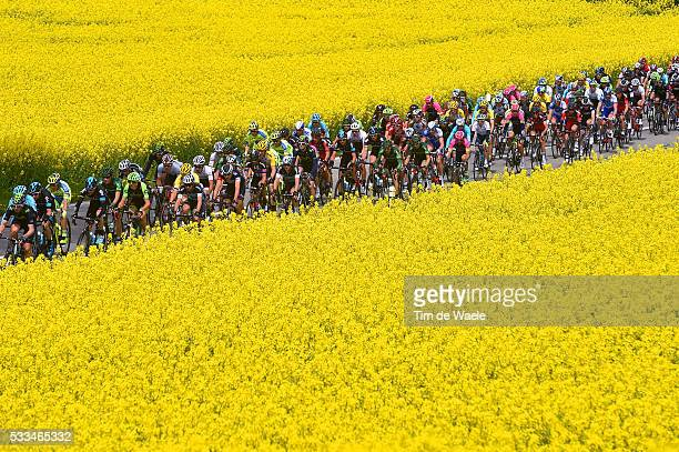 69th Tour de Romandie 2015 / Stage 5 Illustration Illustratie / Peleton Peloton / Flowers Fleurs Bloemen / Landscape Paysage Landschap / Fribourg...