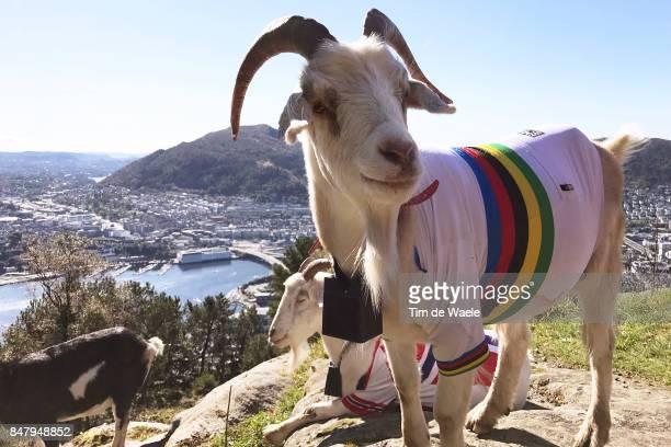 90th Road World Championships 2017 / Opening ceremony Landscape / Goat World Champion Jersey / Bergen City / Opening ceremony / Torgallmenningen /...