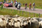 97th Tour de France 2010 / Stage 6 PERGET Mathieu / LANG Sebastian / PEREZ MORENO Ruben / Illustration Illustratie / Cow Vache Koe / Montargis...