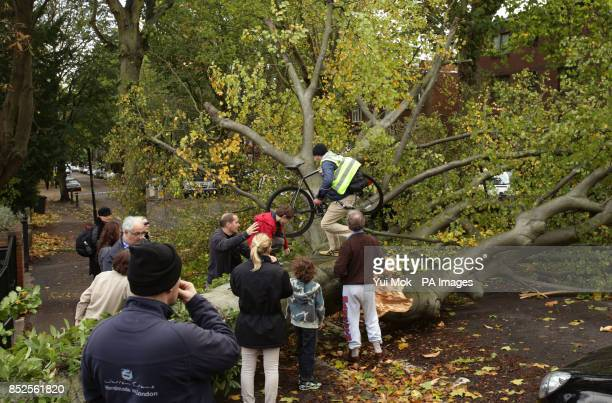 A cyclist climbs over a fallen tree lying across the road in Shepherd's Hill north London due to the storm affecting parts of the UK