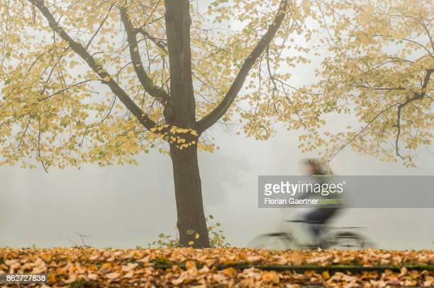 A cyclist is pictured in front of a colorful tree in the foggy morning on October 18 2017 in Berlin Germany