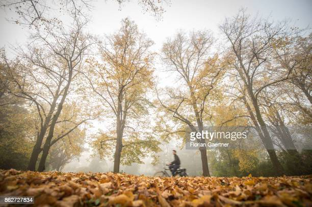 A cyclist is pictured in front of colorful trees in the foggy morning on October 18 2017 in Berlin Germany