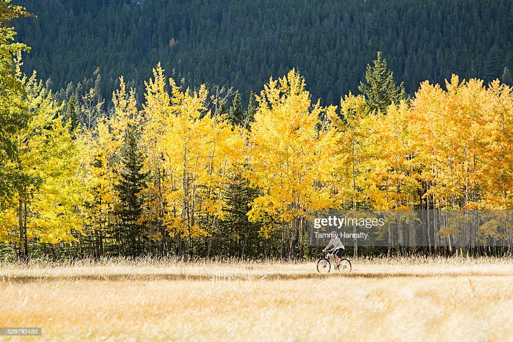 Cyclist riding in forest : Foto stock
