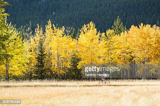 Cyclist riding in forest : Stockfoto