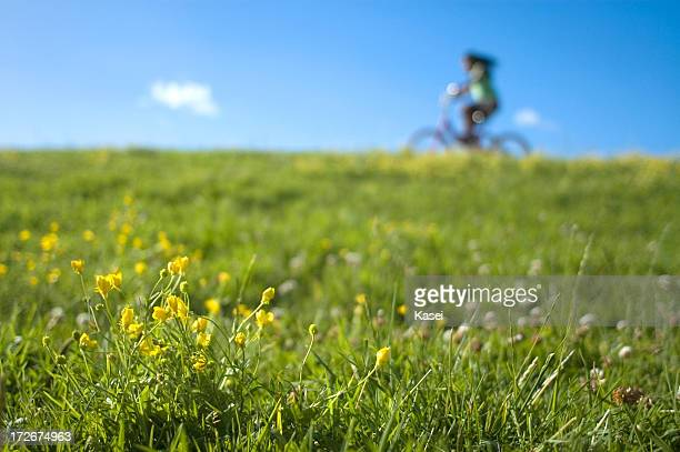 Cyclist Riding Past Flowers