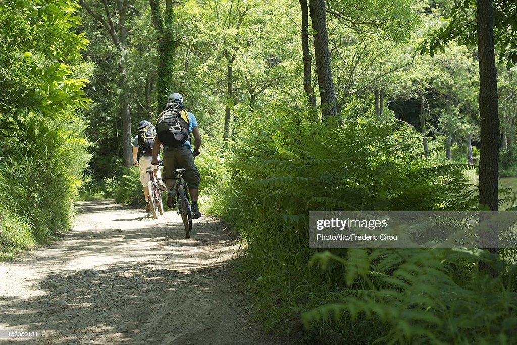 Cyclists biking through woods, rear view : Stock Photo