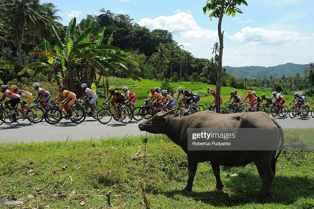 Cyclists compete during stage 5 of the 2014 Tour de Singkarak from Ngalau Indah (Payakumbuh City) to Lake Singkarak (Solok) on June 11, 2014 in Padang, Indonesia.