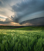 Cyclone on the field. Beautiful natural landscape in the summer time
