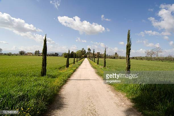 Cypress Trees along Winding Dusty Farm Road in Umbria Landscape