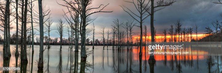 Cypress Trees at Dusk