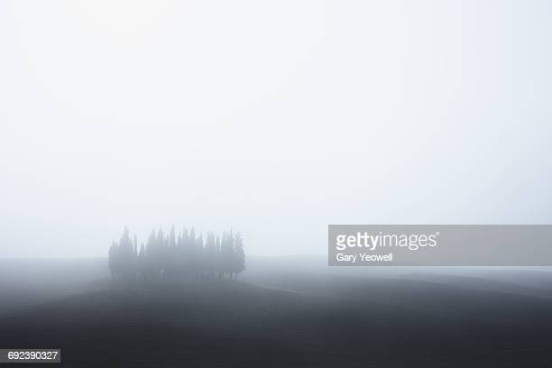 Cypress trees in the mist
