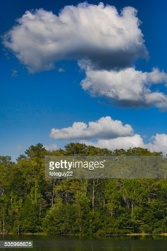Cypress Trees : Stock Photo