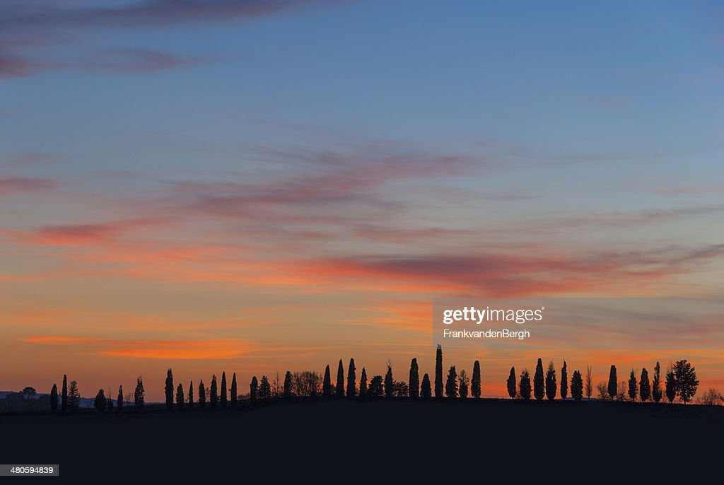 Cypress Trees Silhouette and Colorful Sky : Stock Photo