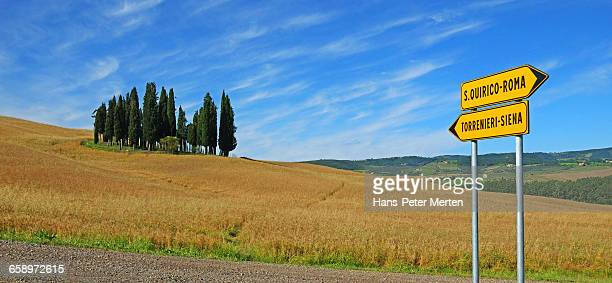 Cypresses on a Hill near San Quirico d'Orcia