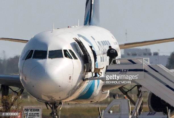 Cypriot security forces take a sniffer dog into an EgyptAir Airbus A320 parked at the tarmac of Larnaca airport after the sixhour hijacking of the...