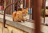 Cyprus lone kitten sitting on low wall behind brown fence and waiting for some gift from passerby. Amazing redheaded alley cat. Nicosian cat
