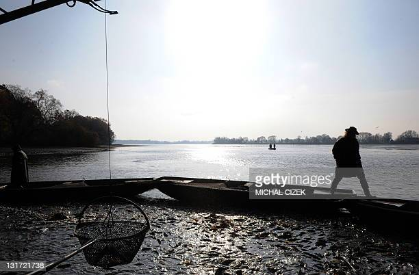 A Czech fisherman walks by boats on November 7 during the annual carp fishing season at the Bosilecky pond beside the Bosilec village near Trebon...
