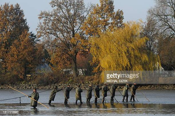 Czech fishermen pull a net early in the morning on November 7 during the annual carp fishing season at the Bosilecky pond beside the Bosilec village...