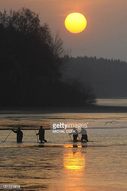 Czech fishermen walk next to fishing nets early in the morning on November 7 during the annual carp fishing season at the Bosilecky pond beside the...
