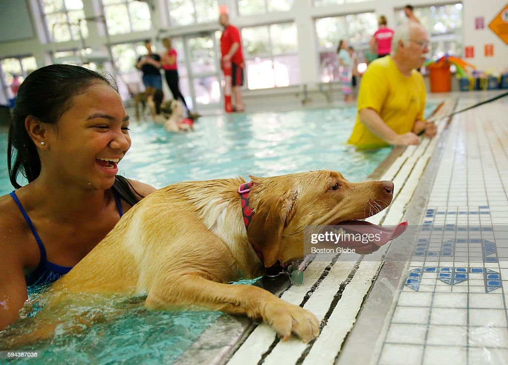 Czenil Santander of Stoneham guides her dog Maezel through her first swim during the annual Puppy Swim at the Burbank YMCA in Reading Mass Aug 21 2016
