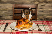 An adorable Dachshund puppy begging for the holiday dinner.