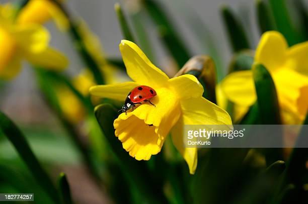Daffodil and Ladybug,