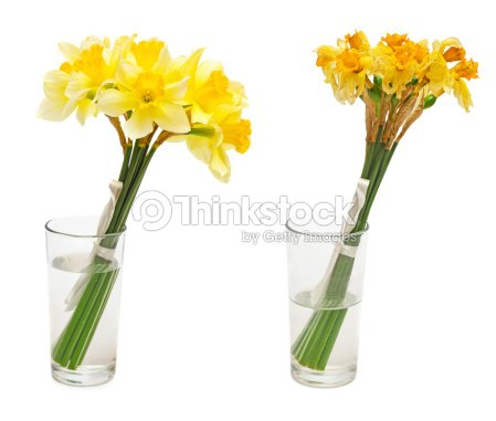 Daffodil Flower In Glass Vase Stock Photo Thinkstock