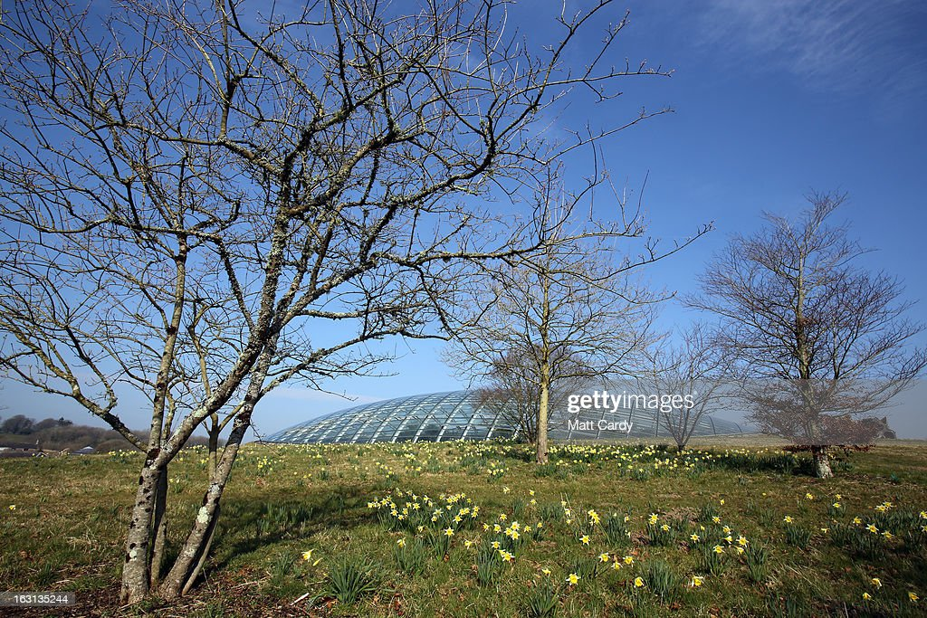 Daffodils grow in front of the Norman Foster designed Great Glasshouse at the National Botanic Garden of Wales on March 5, 2013 near Carmarthen, Wales. As the weather improves, staff at the gardens - which opened in 2000, stretches over 500 acres and contains the largest single span glasshouse in the world - are gearing up for the arrival of the spring season.