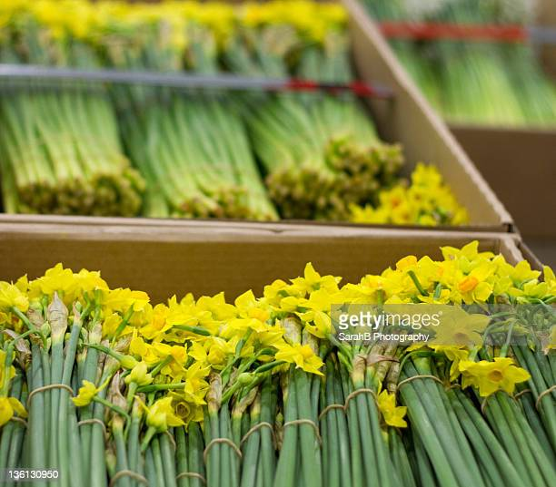 Daffodils in boxes at  market