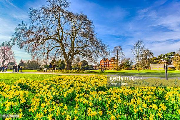 Daffodils in spring at Royal Botanic Gardens Kew.