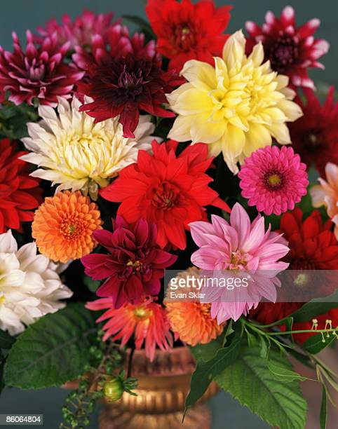 Dahlias in flower arrangement