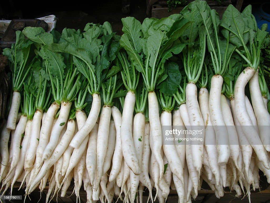 Daikon radish Raphanus sativus var. longipinnatus : Stock Photo