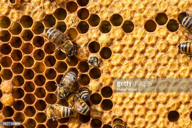 Daily life in a beehive