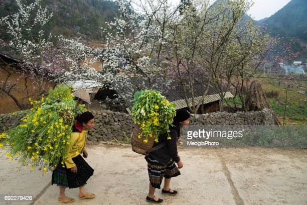 Daily life in Ha Giang