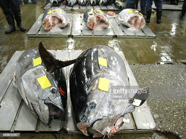 Daily tuna auction at Tsukiji Fish Market