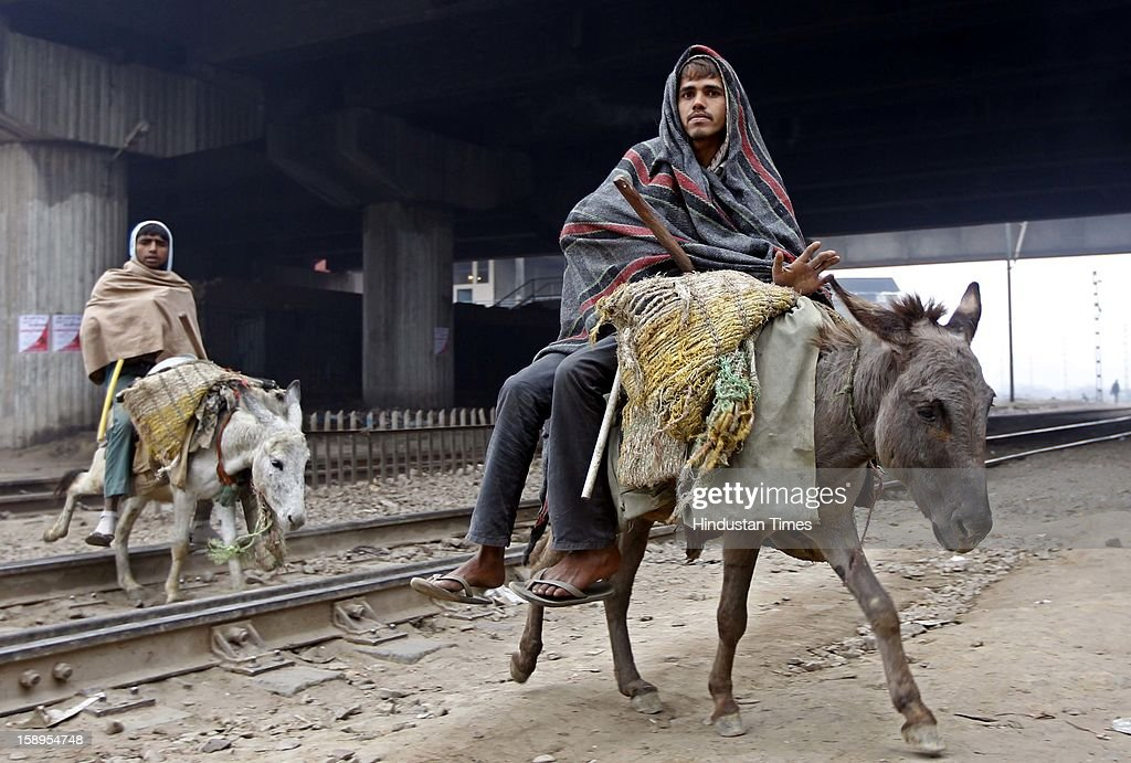 Daily wage laborers packed in warm cloths heading for their work on donkeys on January 4, 2013 in New Delhi, India. Delhi experienced the Coldest Morning Temperature of 2.7 Degree Celsius of this Winter Season. So far 165 people have lost their lives in North India due to severe cold.