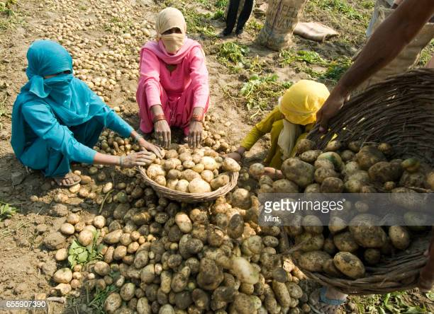 Daily wages worker working in farm land in Bazida Zattan Village photographed on February 24 2010 in Karnal India
