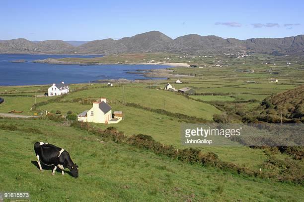 Dairy Farm, Southern Ireland