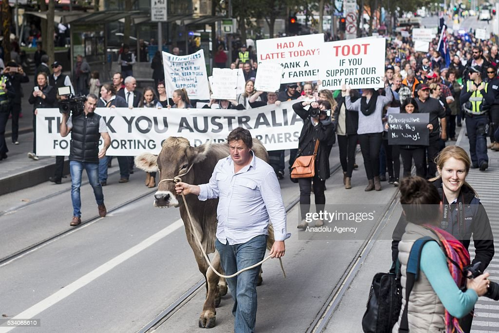 Dairy Farmer Ben Govett walks 'Sary' the dairy cow along the street during a protest demanding Australian government to solve the dairy crisis in Melbourne, Australia on May 25, 2016.