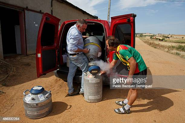 Dairy farmer David Vicente fills his semen storage bottle with liquid nitrogen after buying bull semen from a supplier in his farm on September 1...
