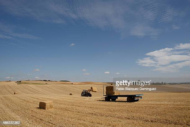 Dairy farmer David Vicente operates a tractor to collect straw bales from a harvested field on September 1 2015 in Fuentespreadas near Zamora in...