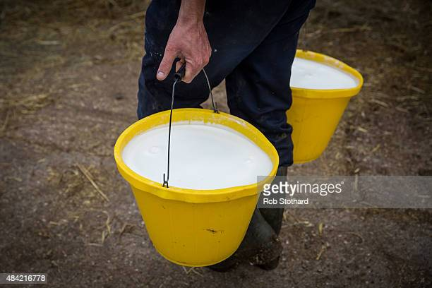 Dairy farmer Haydn James carries buckets of milk at Newlands Farm on August 16 2015 in Bozeat England Newlands Farm Bozeat has 138 cows and is part...