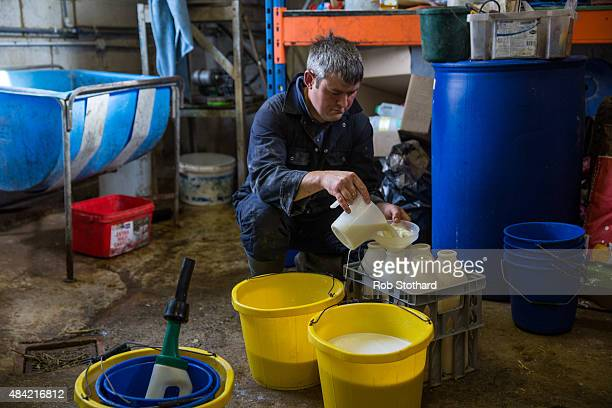 Dairy farmer Haydn James prepares milk to feed calves at Newlands Farm on August 16 2015 in Bozeat England Newlands Farm Bozeat has 138 cows and is...