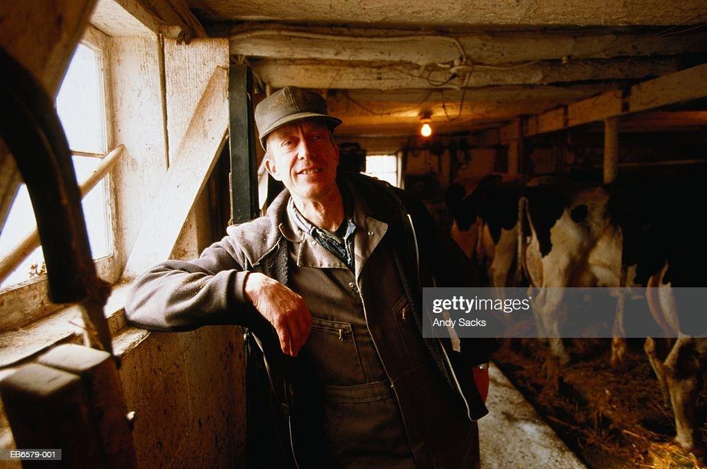 Dairy farmer in barn, cows in background, Chelsea, Michigan, USA : Stock Photo