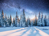 Dairy Star Trek in the winter woods. Mysterious winter landscape majestic mountains in winter.