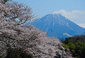 Daisen with Sakura