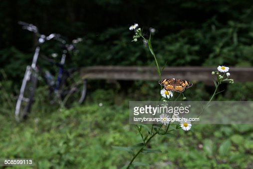 Daises with Butterfly on a Bench : Stock Photo