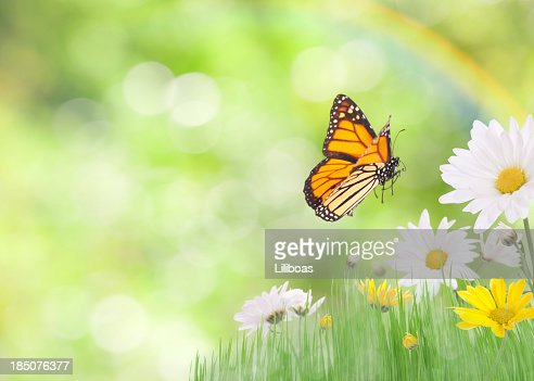Daisies and a Monarch Butterfly