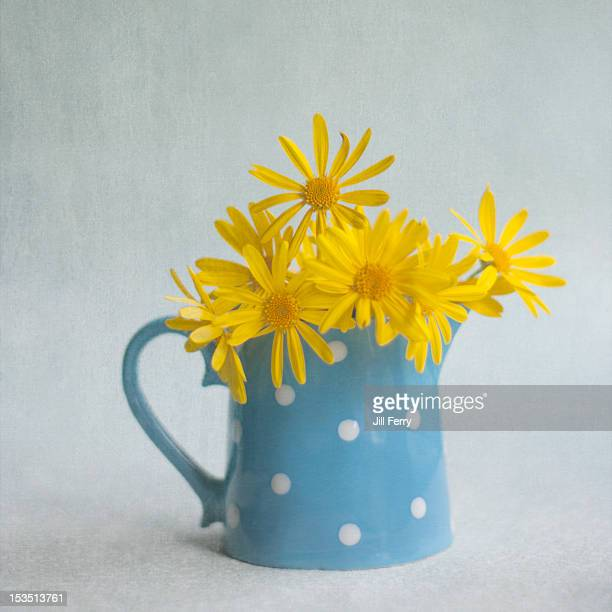 Daisies in jug